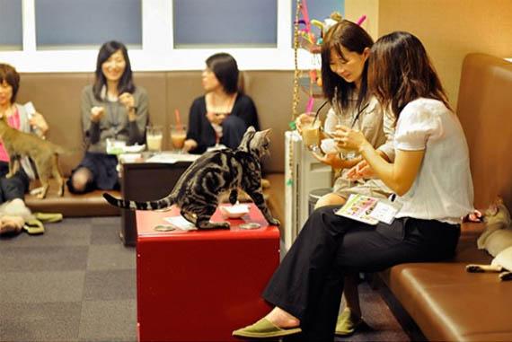 Le pionnier à Tokyo: le cat café Neko No Mise