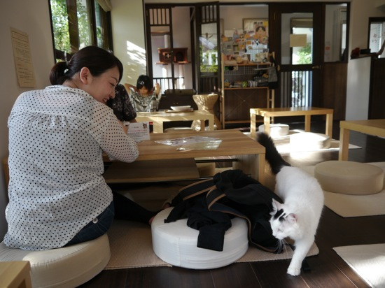 Le Mellow Cat Cafe dans le quartier de Kichijoji
