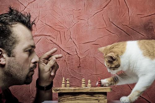 chat-echec-jeu
