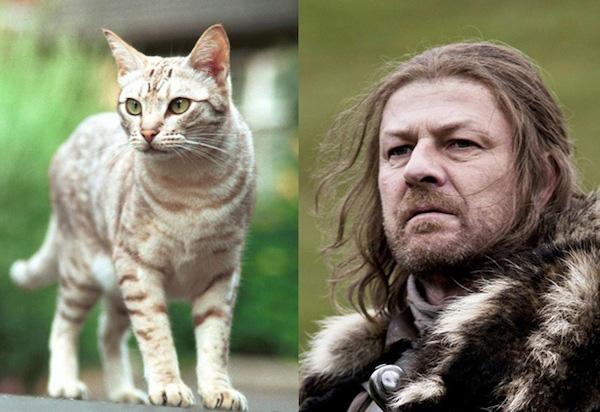 game-of-thrones-Eddard-Stark