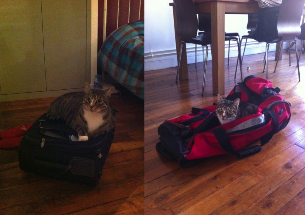 La valise assiégée