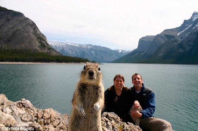 """Le premier """"animal photobombing"""" officiel: l'écureuil du lac Minnewanka (CAN)"""