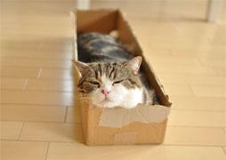 maru-carton-small