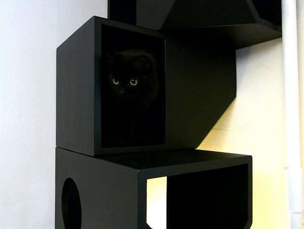 Catissa Black