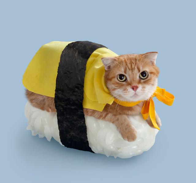 Sushi-Chats
