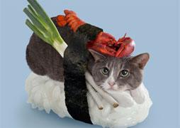 sushi-chats-small