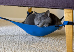 cat-crib-small