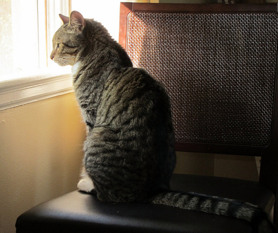 chat-fauteuil-fenêtre