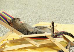 chat-garde-été