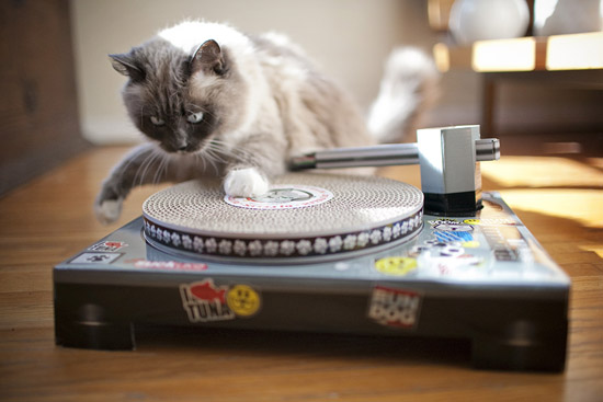 DJ Cat Turntable