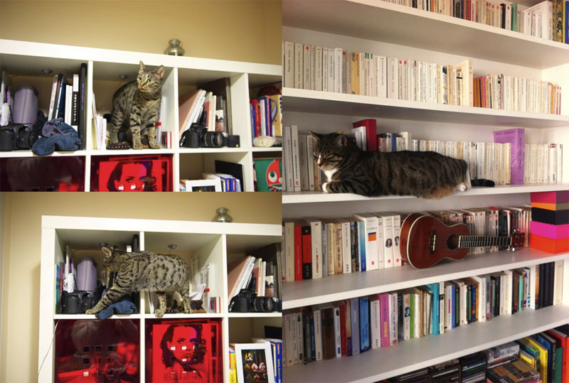 Un beau spécimen de biblio-cat