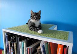chat-bibliothèque-livre-small