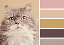 chat-couleur-peinture-small