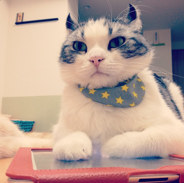 InstaWeek #5: le chat espion aux oreilles de Mr. Spock