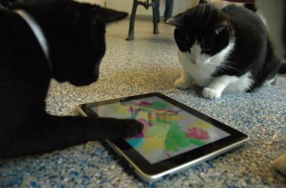 Jeux iPad pour chats
