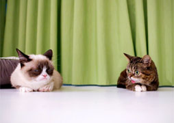 grumpy-cat-lilbub-small