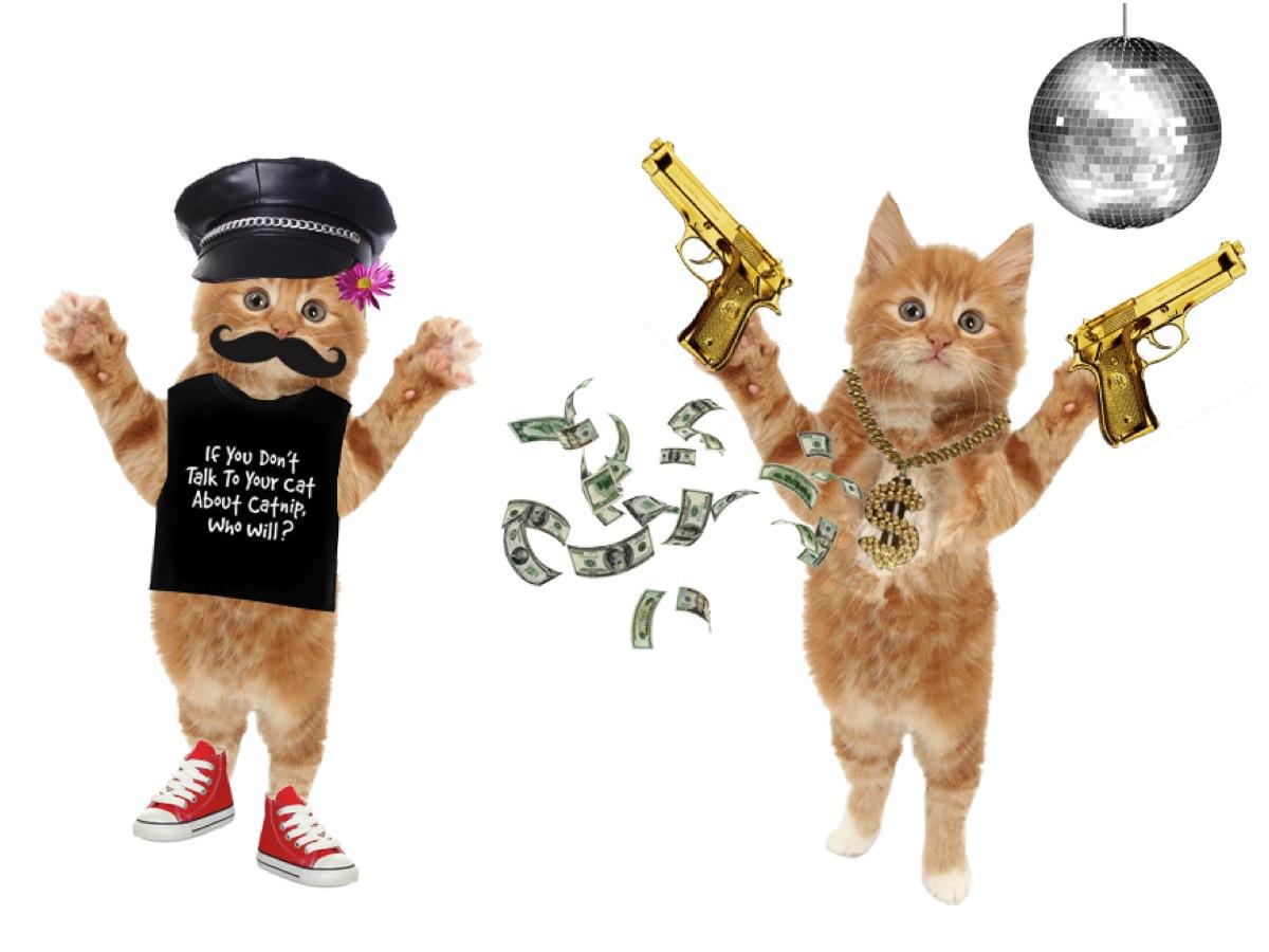 Dress a cat
