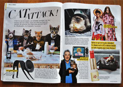grazia-cat-attack-small
