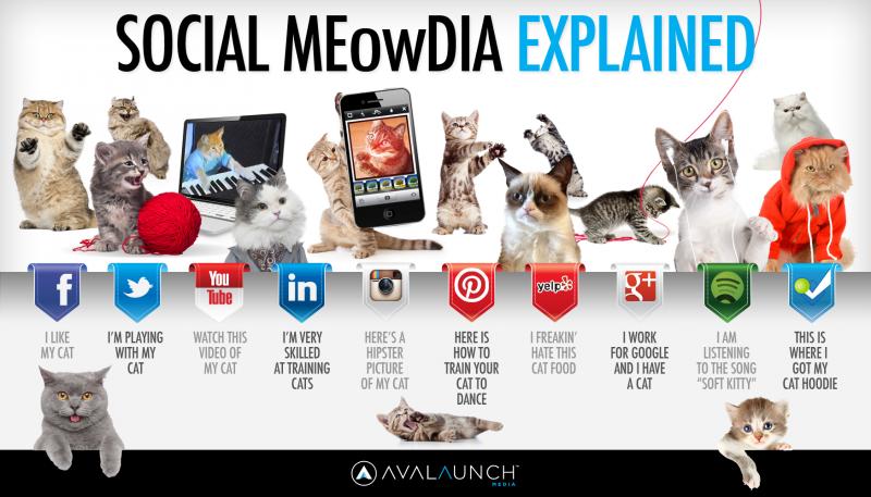 Les réseaux sociaux expliqués par les chats