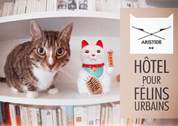 aristide-hotel-pour-chats-s