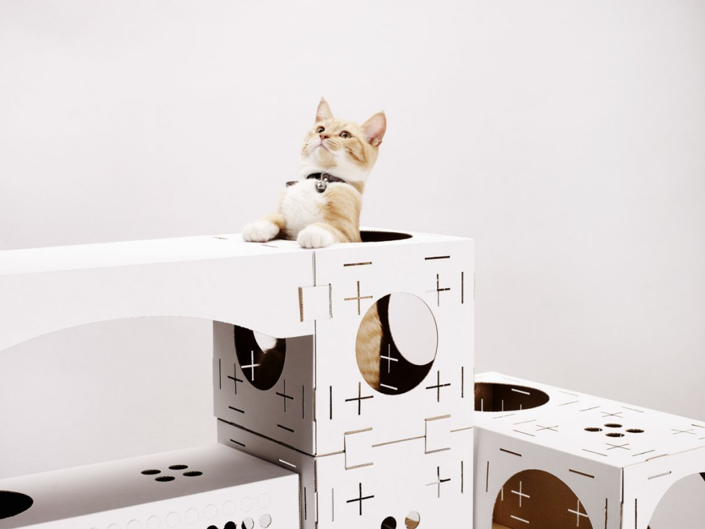 PoopyCat Blocks cartons pour chats